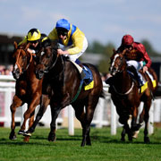 Focus On Favourites - Juveniles Flat Races on Turf