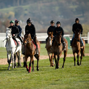 Homepage - Cheltenham Stable Tours Link