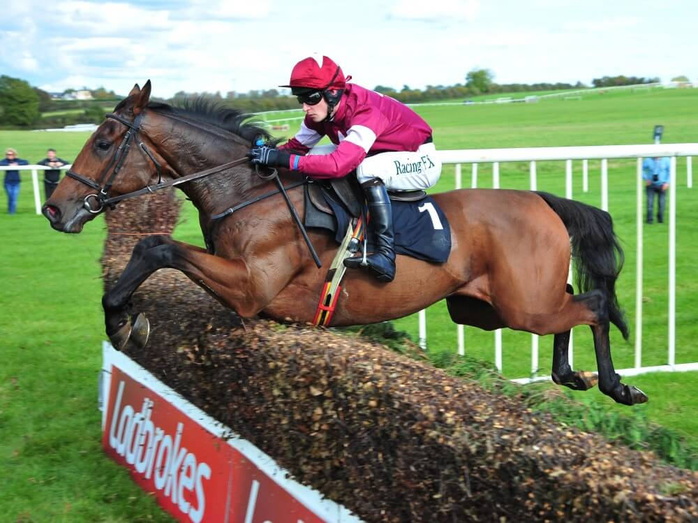 Straight to Cheltenham for Alpha Des Obeaux