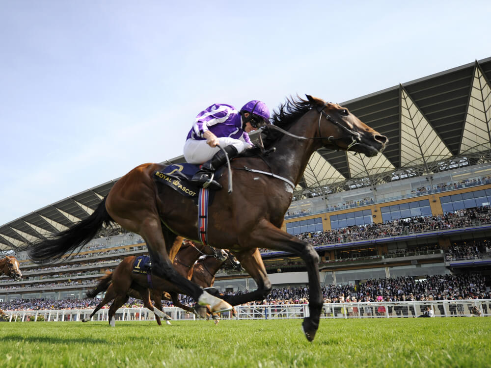 Ascot 2017 Tipping Challenge Result Wednesday