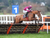 Robbie Power encourages Samcro team to consider Champion Hurdle run