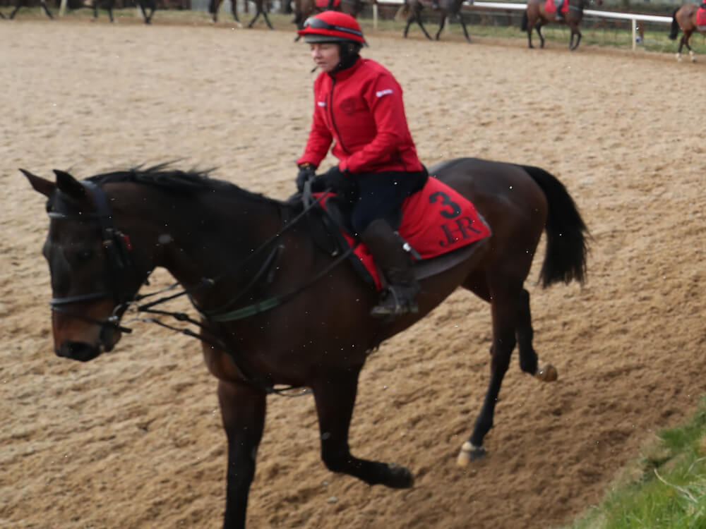 Our Duke back to his best as Gold Cup looms