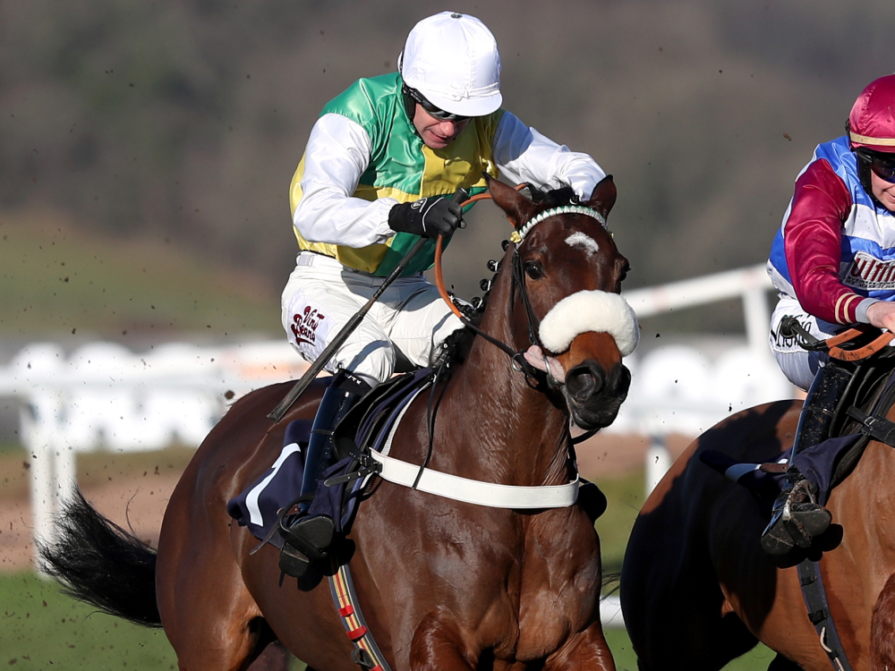 Donald McCain favouring handicap route at Cheltenham for Testify