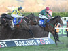 Last-gasp Mister Whitaker provides Mick Channon with Festival winner