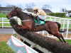 Invitation Only looking to spark JLT party for Willie Mullins at Cheltenham